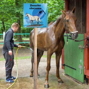 douche chevaux