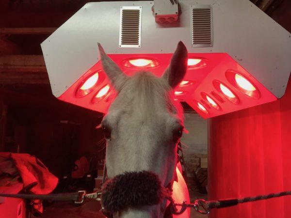 solarium sunbox 1 soins chevaux boxprotec