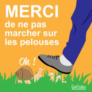 BOXPROTEC - panneau / autocollant / stickers / ne pas marcher sur les pelouses / interdit de marcher dans l'herbe / écuries / club / mairie / propriété / interdiction