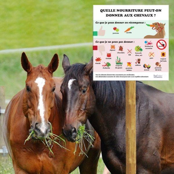 panneau nourriture interdite et autorisé à donner aux chevaux
